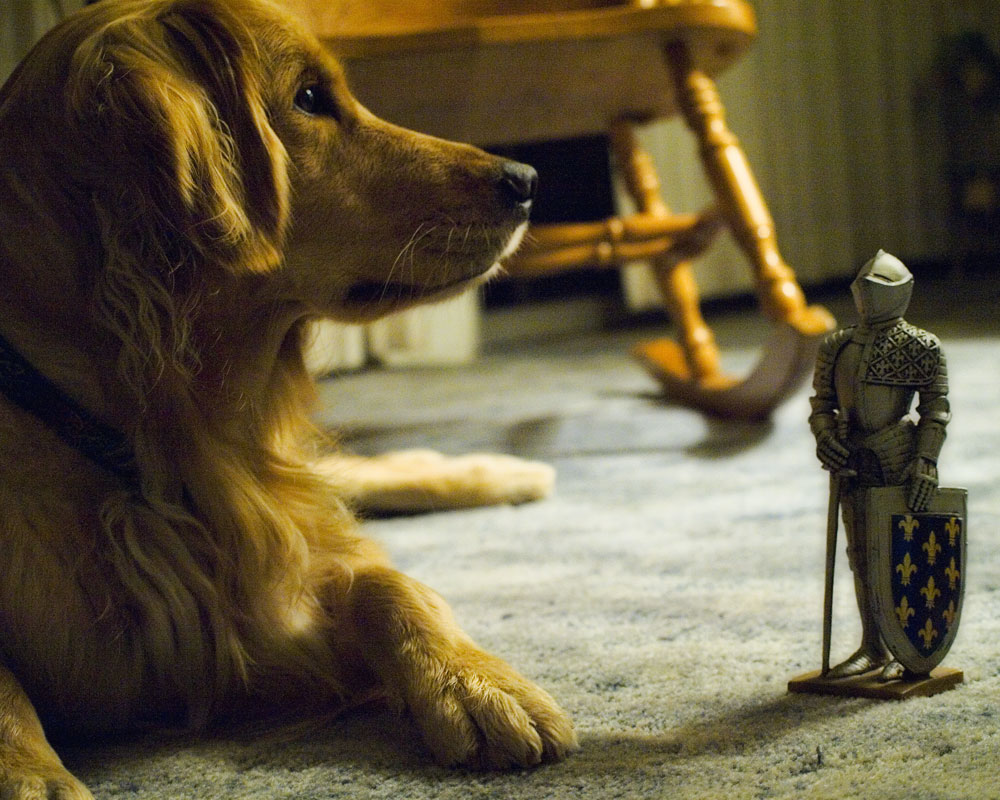 knight figure standing on floor beside golden retriever