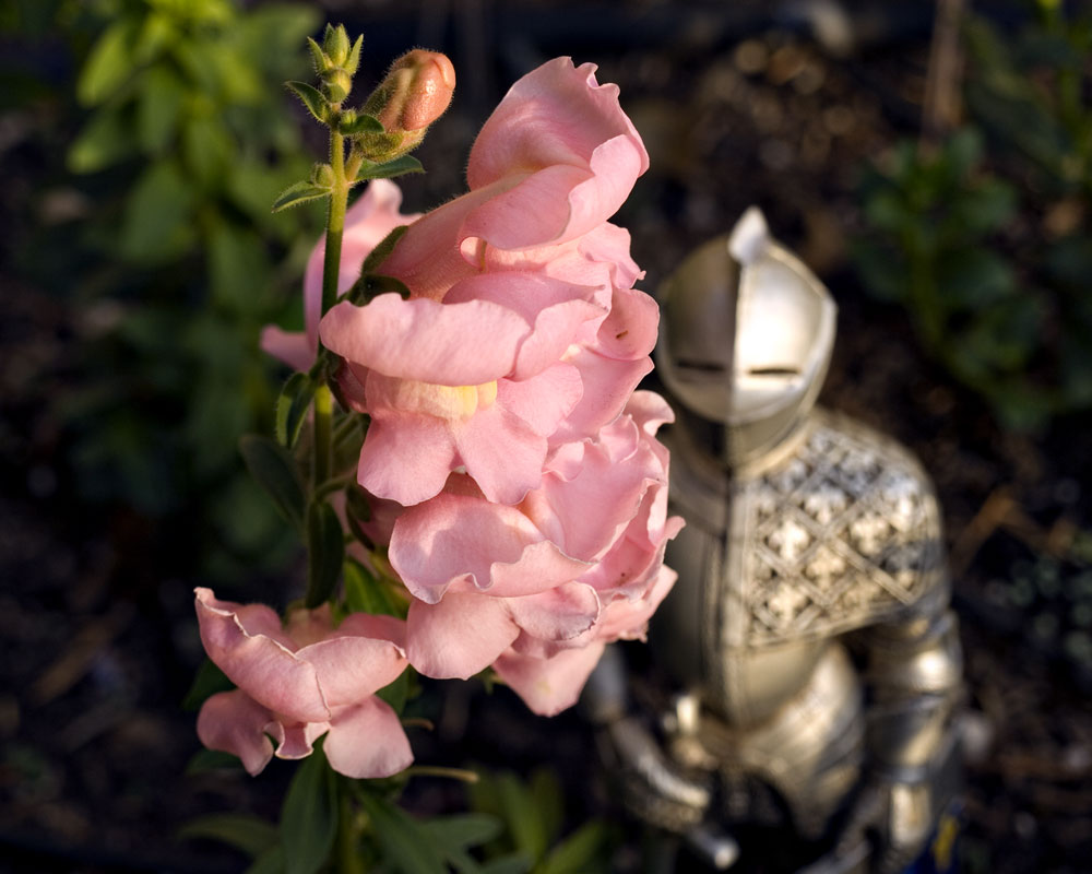knight figure with snapdragons