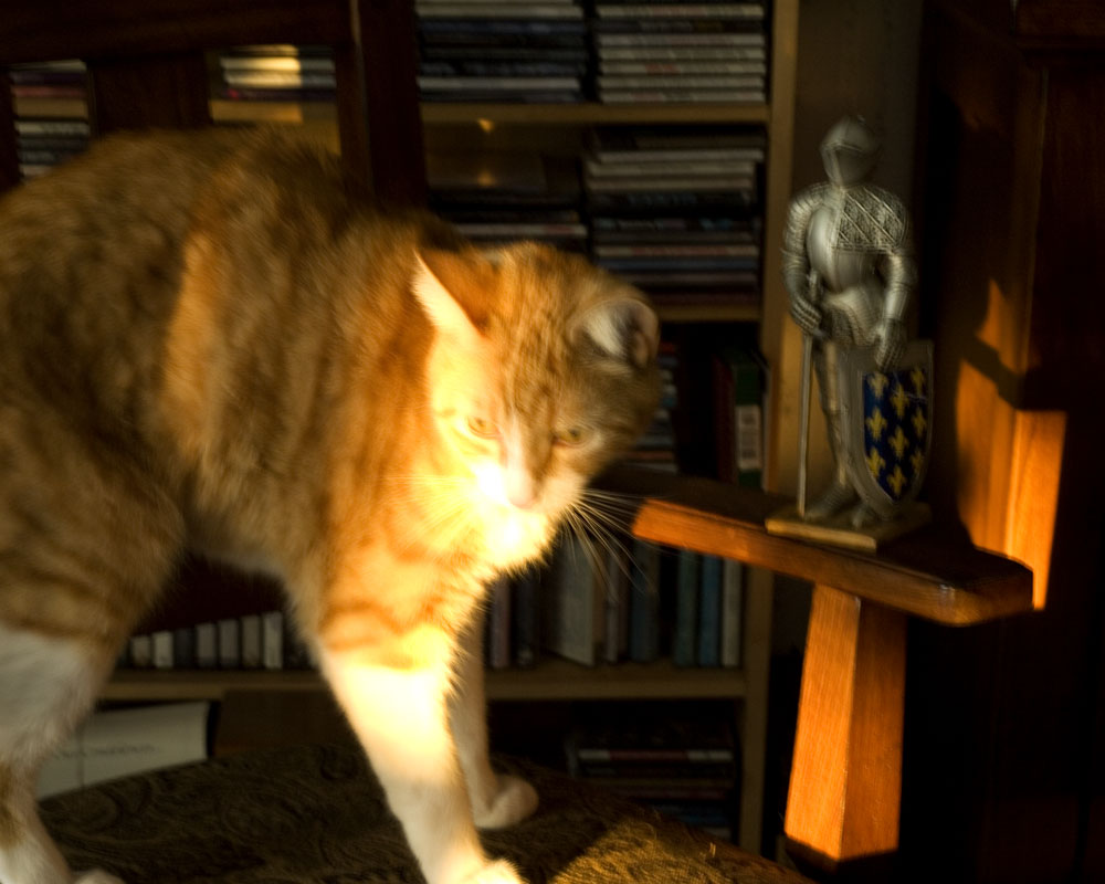 knight in sunbeam with orange cat