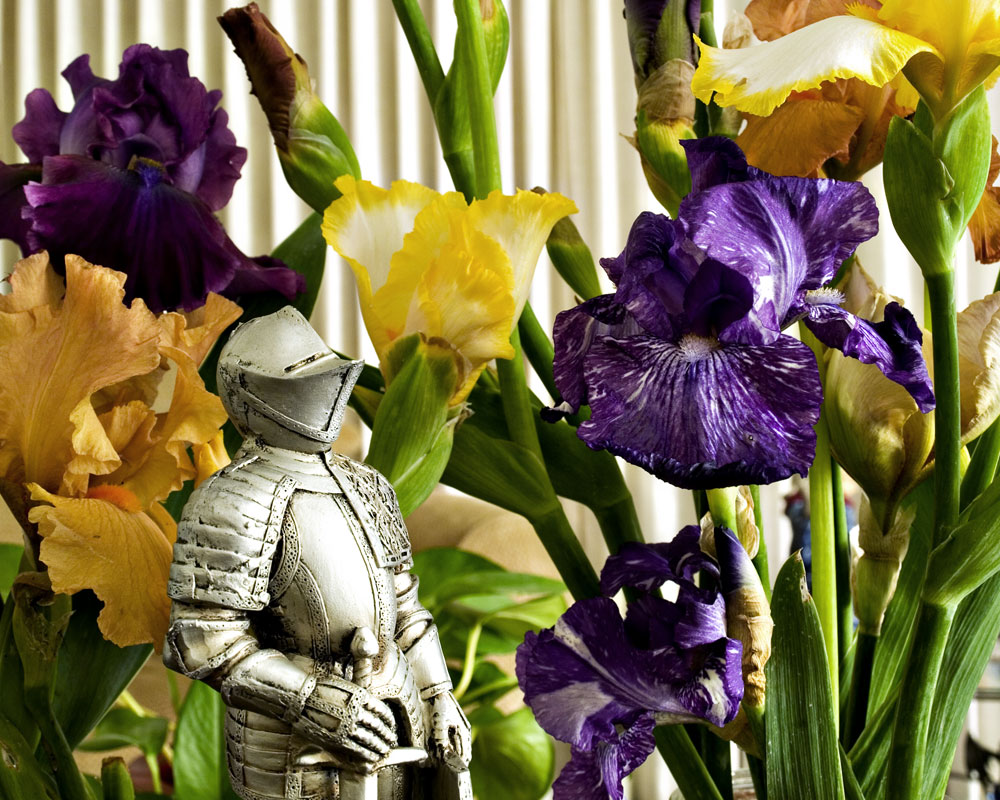 knight with irises
