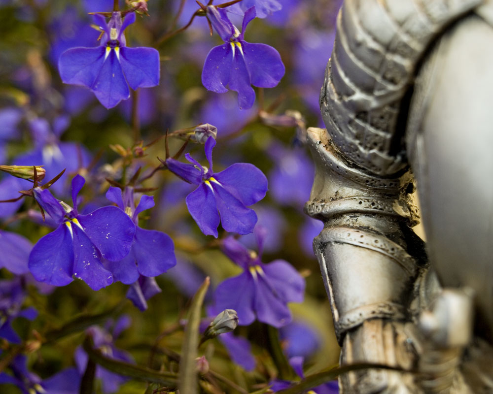 knight with purple flowers