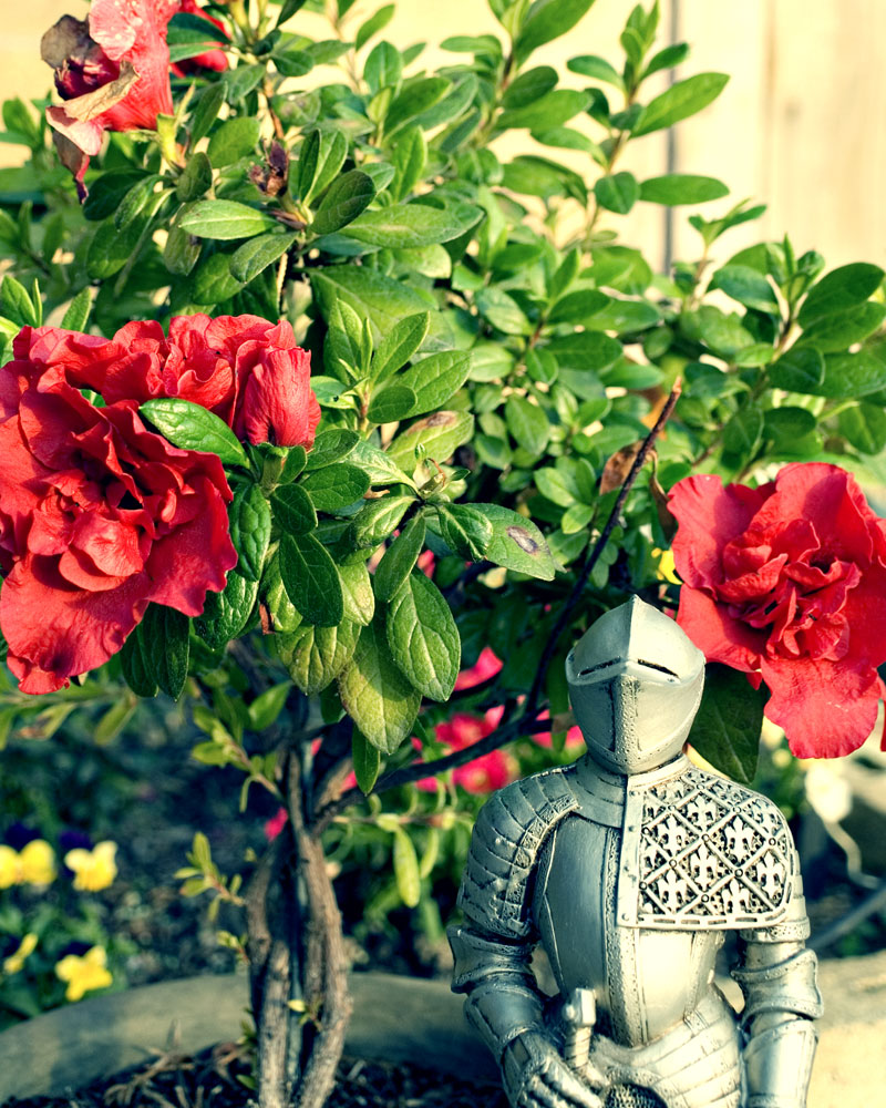 knight figure with camellias